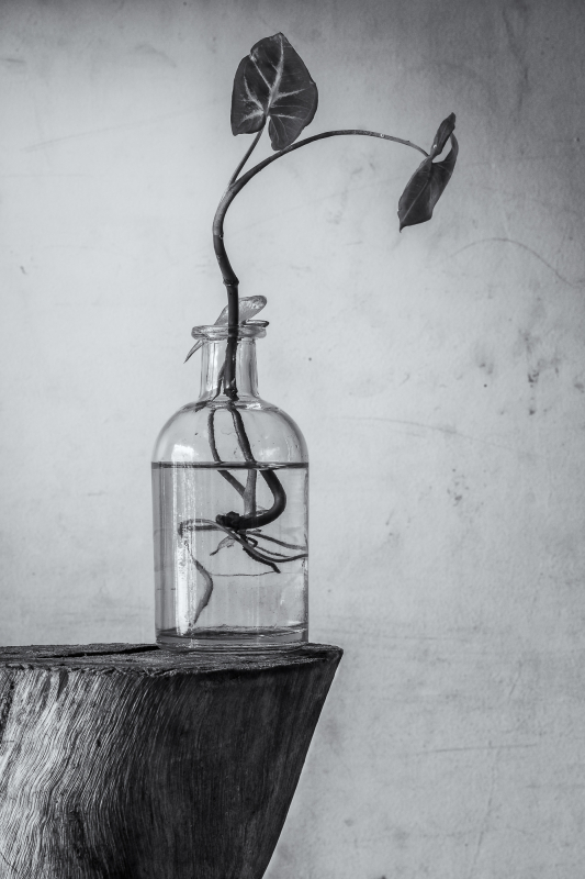 Plant in bottle - black and white